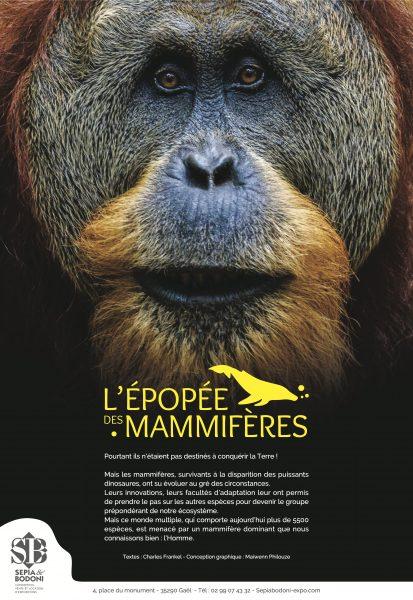 L'épopée des mammifères